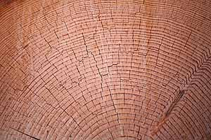Large timber growth rings