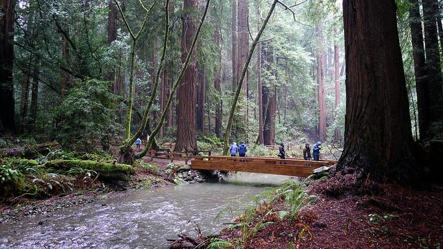 muir-woods-national-monument-forest-stewardship-council-channel-lumber.jpg #2
