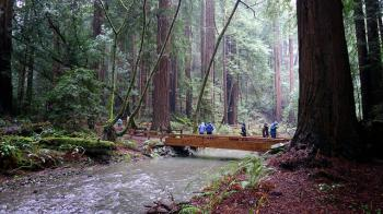 Muir Woods - Channel Lumber